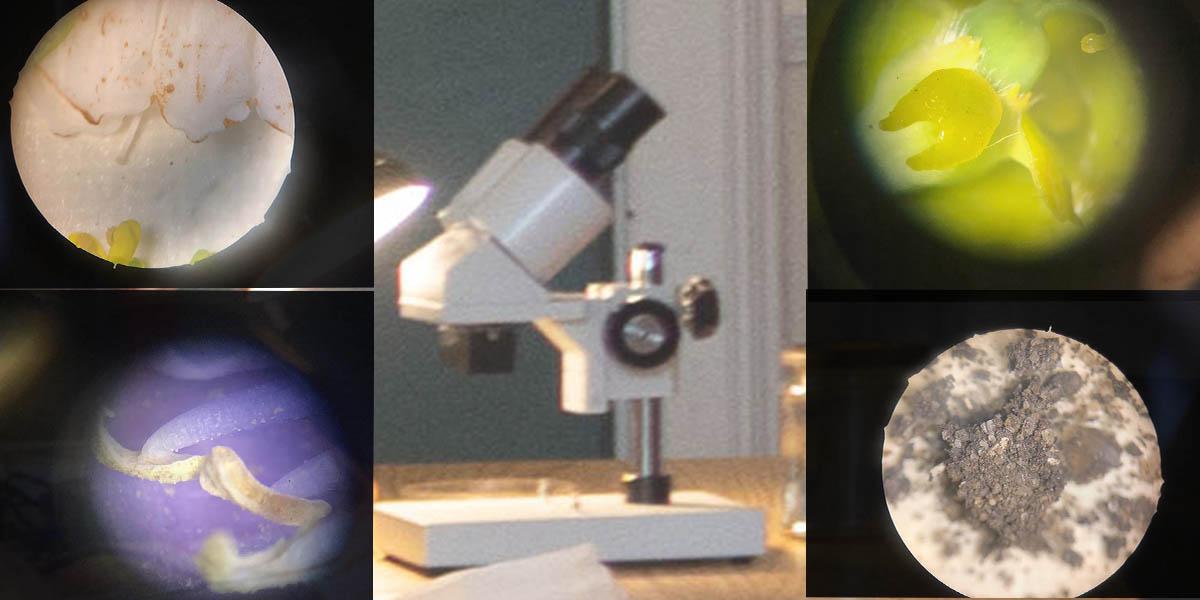 Fig. 3: SLBI - the botanist gaze