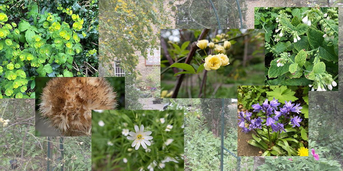 Fig. 1: SLBI garden impression